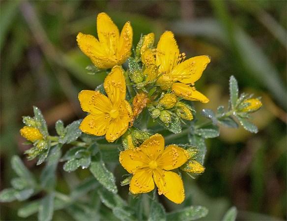 Flower 71