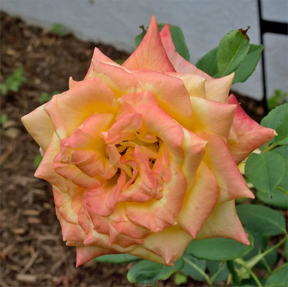 Flower 78