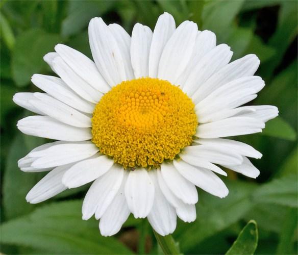 Flower 81