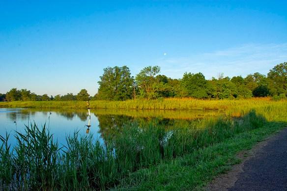 Marsh Pond 12