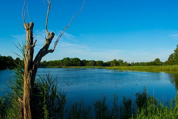 Marsh Pond 13