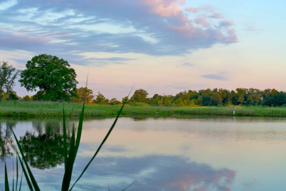 Marsh Pond 15