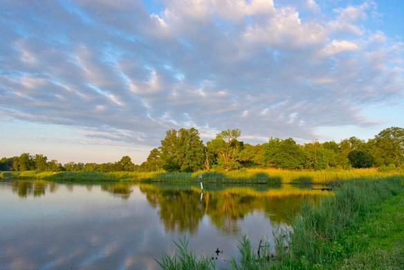 Marsh Pond 18