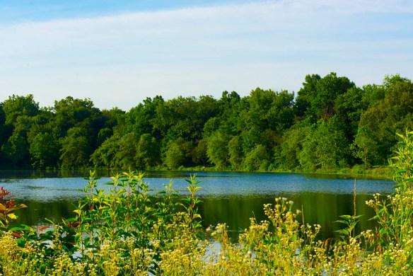 Lake Artemesia 51