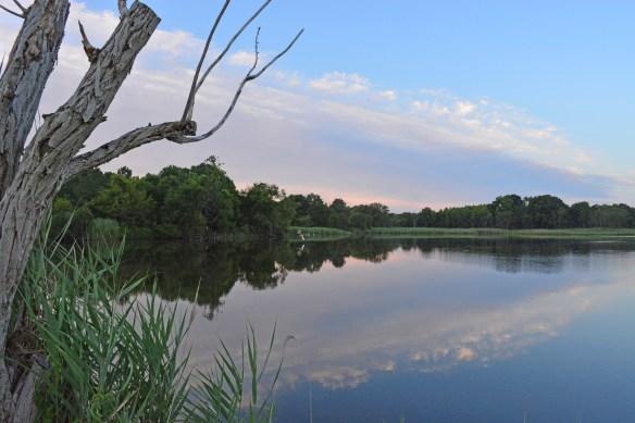 Marsh Pond 21