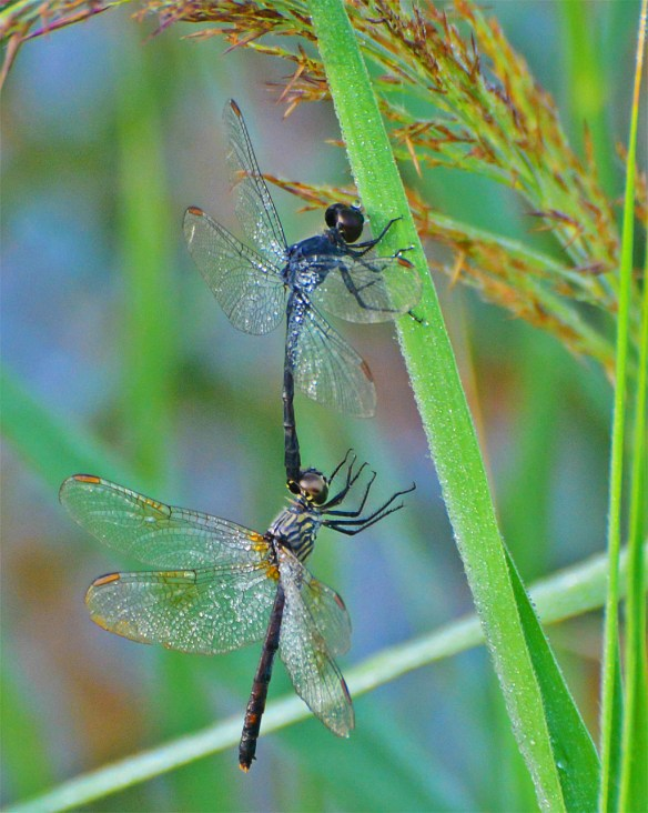 Dragonfly 89