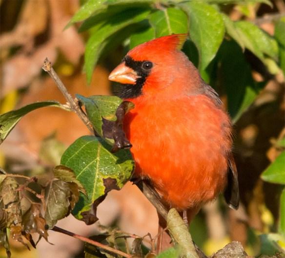 cardinal-2016-28