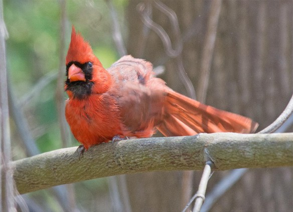 Cardinal 2017-2