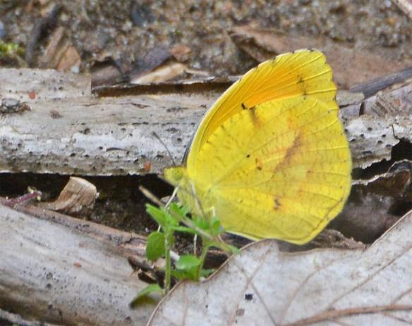 Butterfly 46