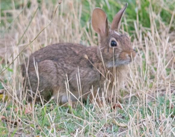 Rabbit 28