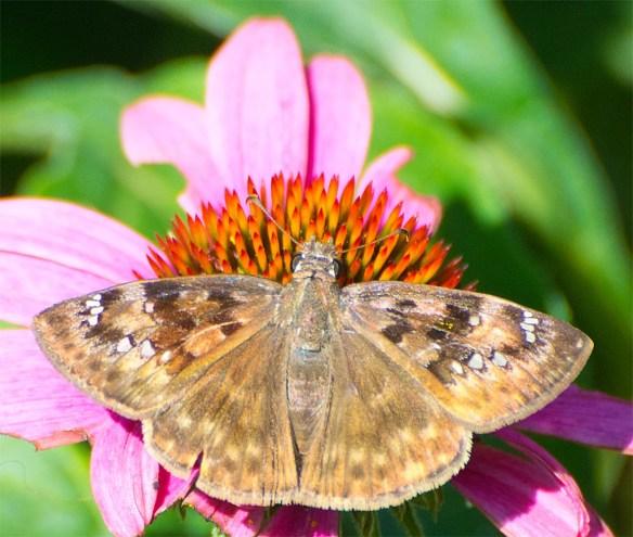 Butterfly 58