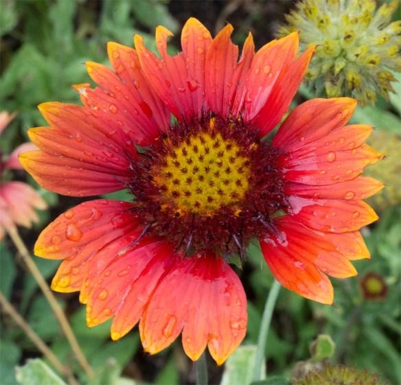Flower 103