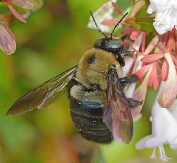 Bee 231