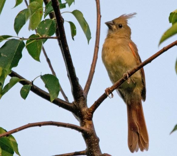 Cardinal 2017-11