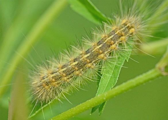 Caterpillar 230