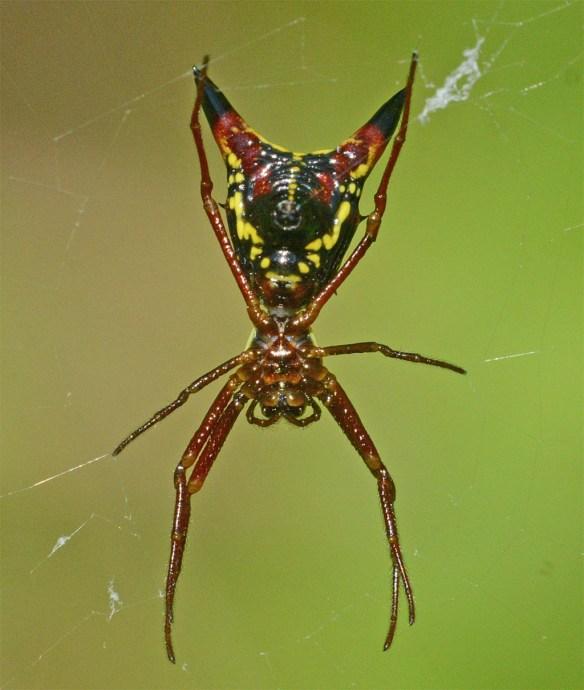 Spider 276