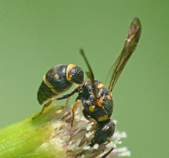 Wasp 22