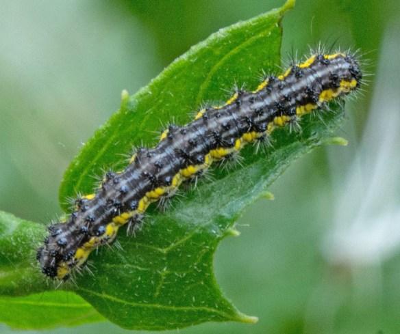 Caterpillar 234