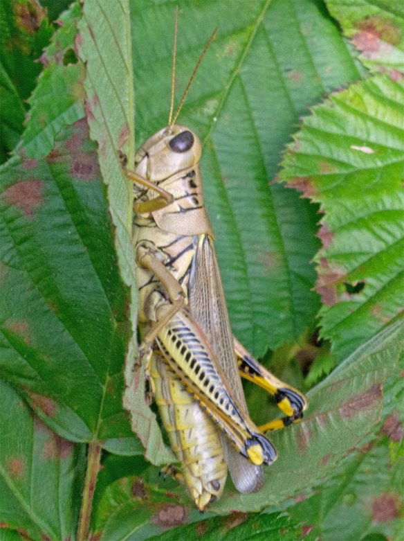 Differential Grasshopper 13