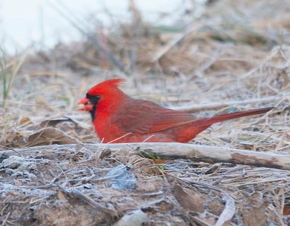 Cardinal 2018-2