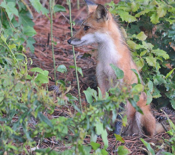 Fox 106