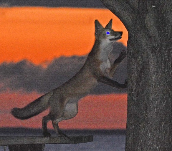 Fox 1099