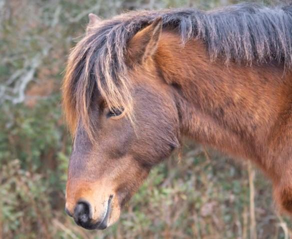 Pony 2019-3