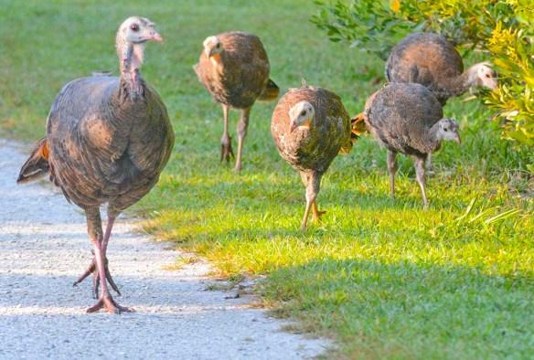 Wild Turkey 2019-23