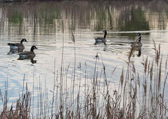 Canada Goose 2020-19