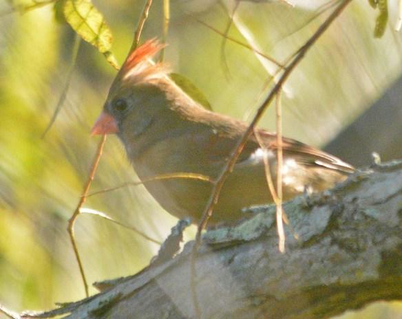 Cardinal 2020-13