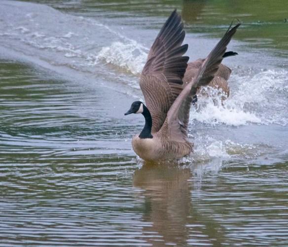 Canada Goose 2021-61