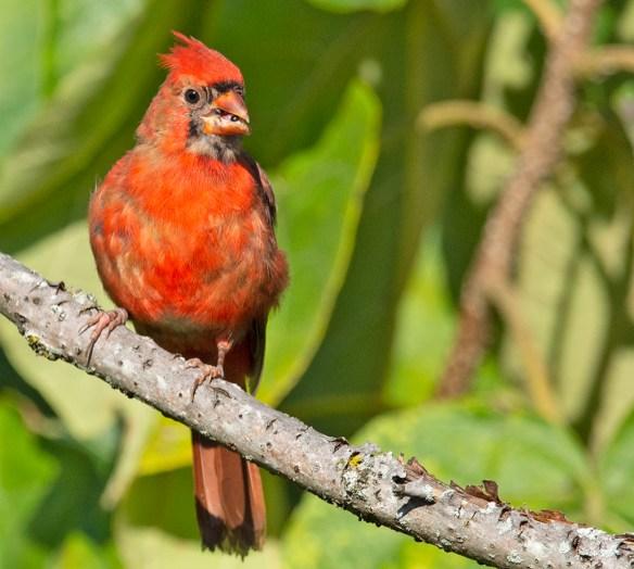 Cardinal 2021-56