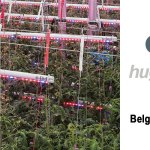 c-led distributed by hugo neumann for belgium and luxembourg