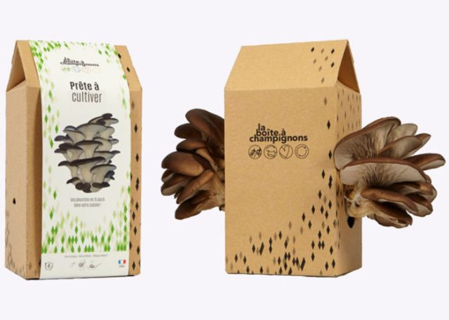 kit-faire-pousser-champignons-pleurotes-contenu