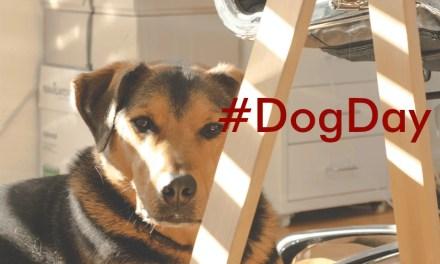 Mascotas a la oficina ¿Es posible en México?
