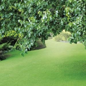 Tuinplanten grond aarde 40 liter