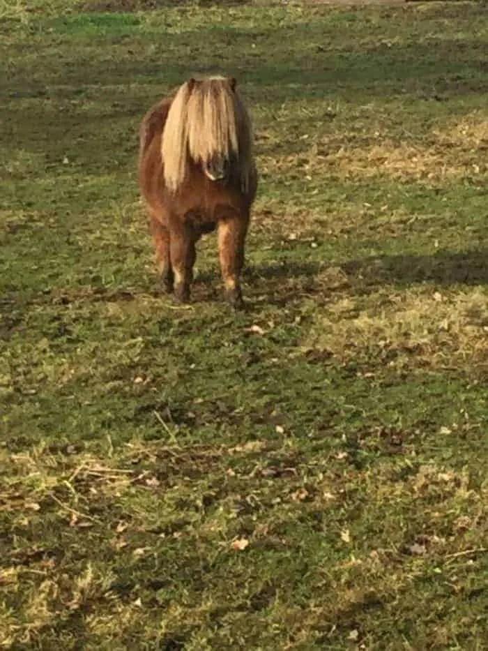 pony mode