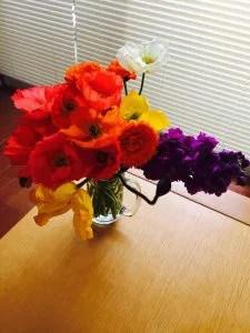 南房総のお花
