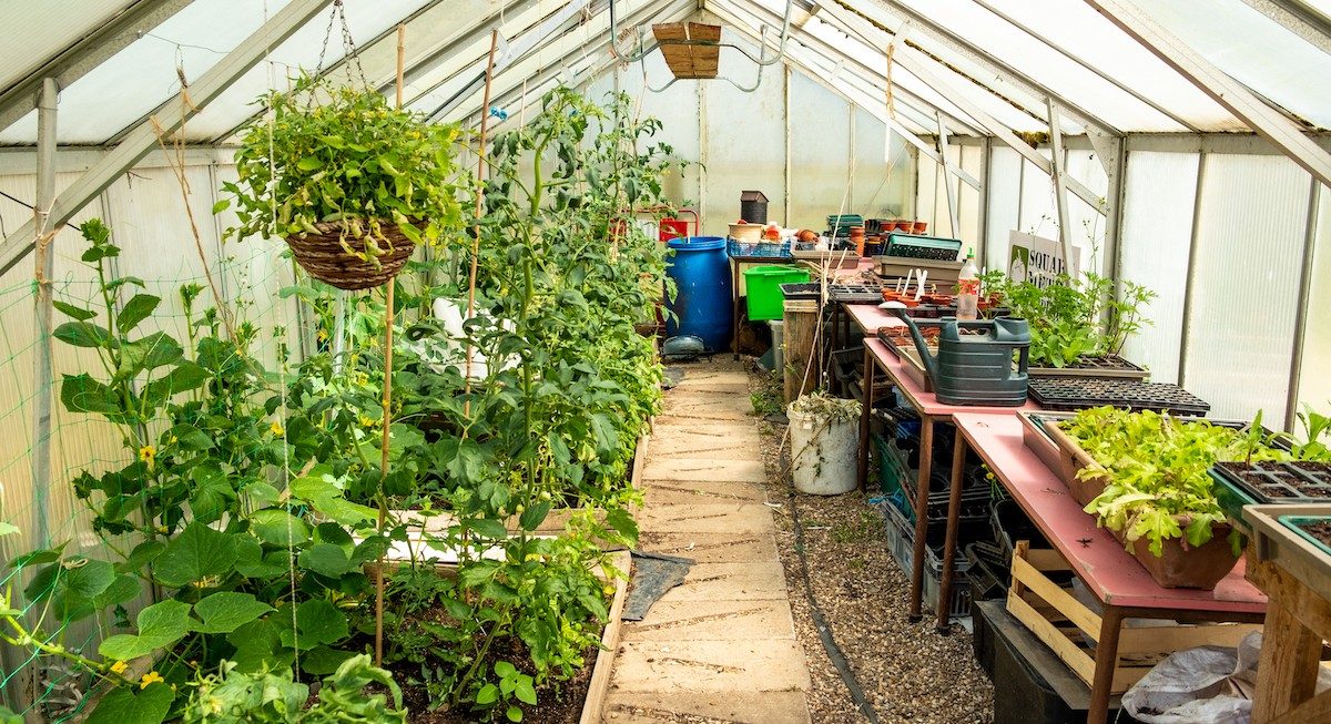 Photo shows a large greenhouse with many plants growing and hanging from the ceiling.