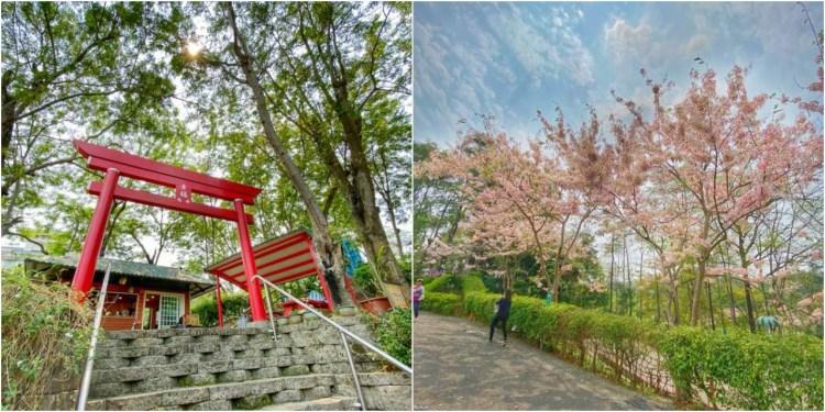 台南旅遊景點「尖山埤江南渡假村」季節限定盛開粉色花旗木!秒飛日本渡假去~旭山小市集|門票|柳營景點|