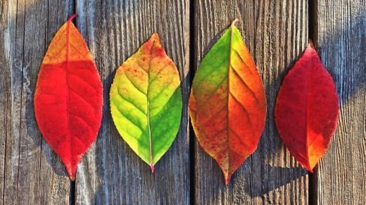 Как разные цвета влияют на наши эмоции