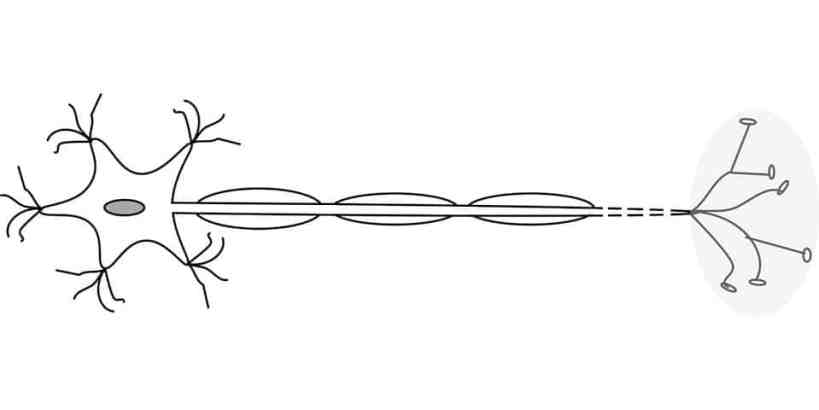 Motor Neurons
