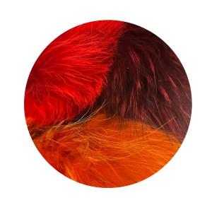 Les rouges et oranges