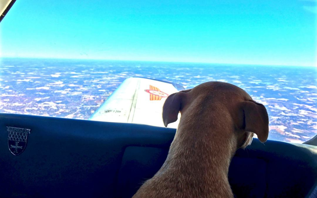 Episode 43: Dogs On A Plane