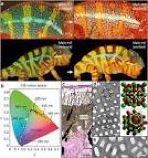 Polymer that works like chameleon skin