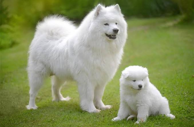 Cute white dogs