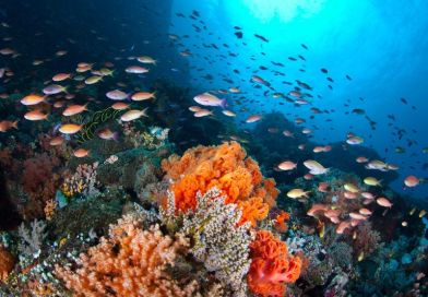 Heatwaves in the world's oceans have become over 20 times more frequent due to human influence