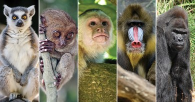 Primate brain size does not predict their intelligence