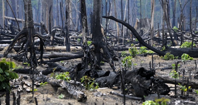 New vegetation grows amidst burnt trees