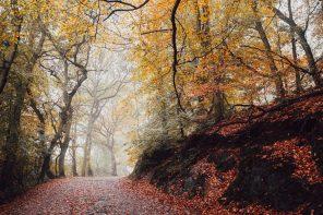A Walk, A Poem, and an Autumn Day's Wonder